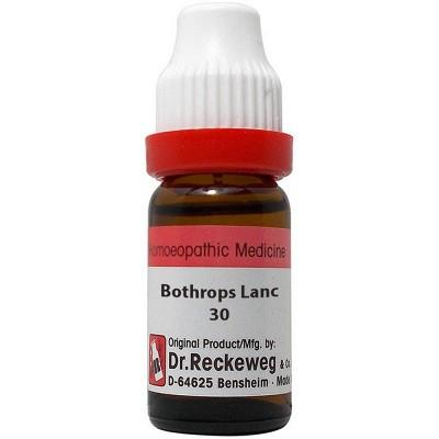 Bothrops Lanceolatus