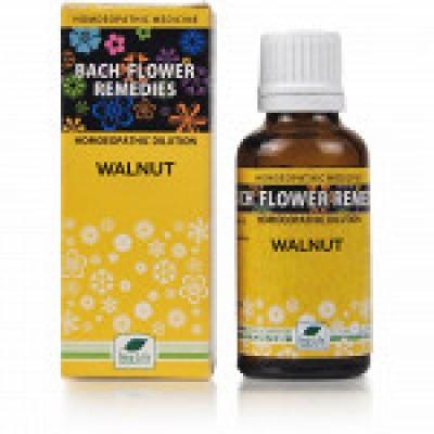 Batch Flower Walnut (30 ml)