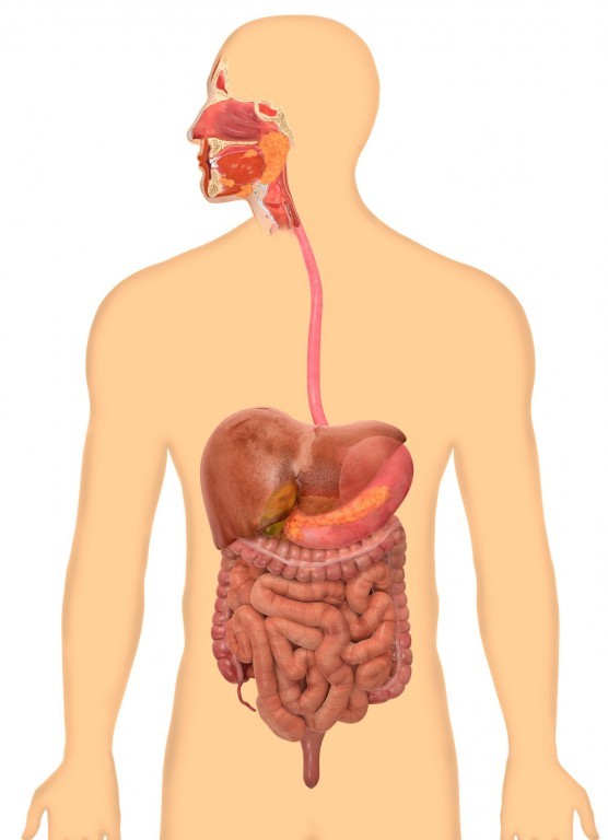 Homeopathy Medicine for Digestive System