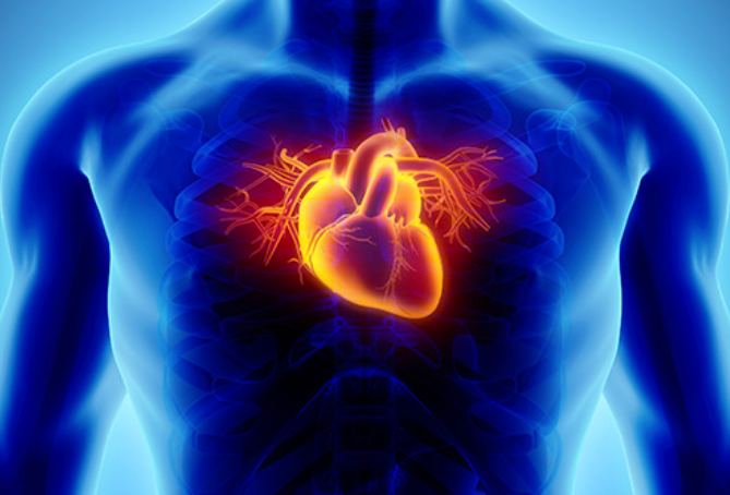 Homeopathy Medicine for Heart & Blood Circulation