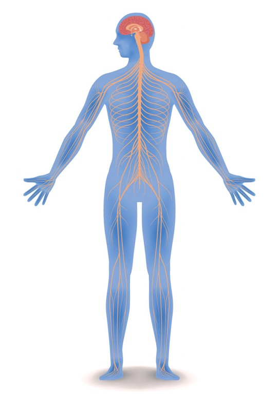 Homeopathy Medicine for Nervous System