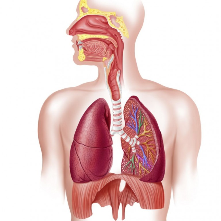 Homeopathy Medicine for Respiratory System